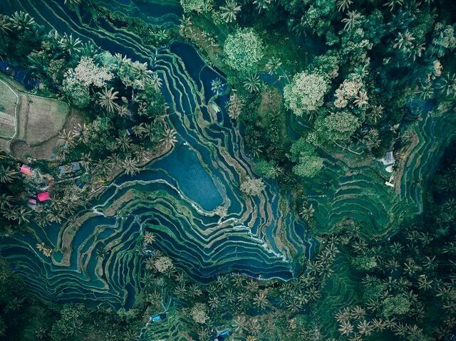 DECEMBER 21, 2017AERIAL TERRACE  Rice terraces form intricate patterns in Bali, Indonesia. Using terraces to farm in hilly or uneven areas of land prevent soil erosion and help with irrigation.  PHOTOGRAPH BY EVGENY VASENEV,