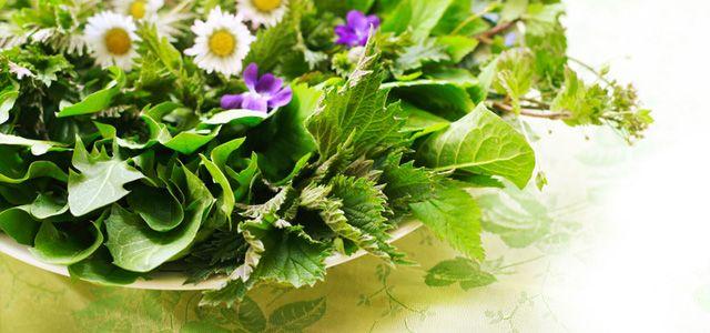 Wildkräuter sammeln, bestimmen, essen: 11 Tipps