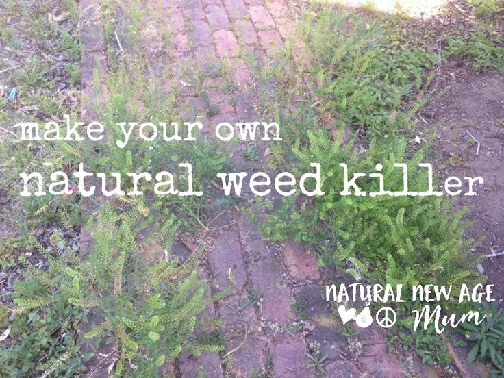 make-your-own-natural-weed-killer