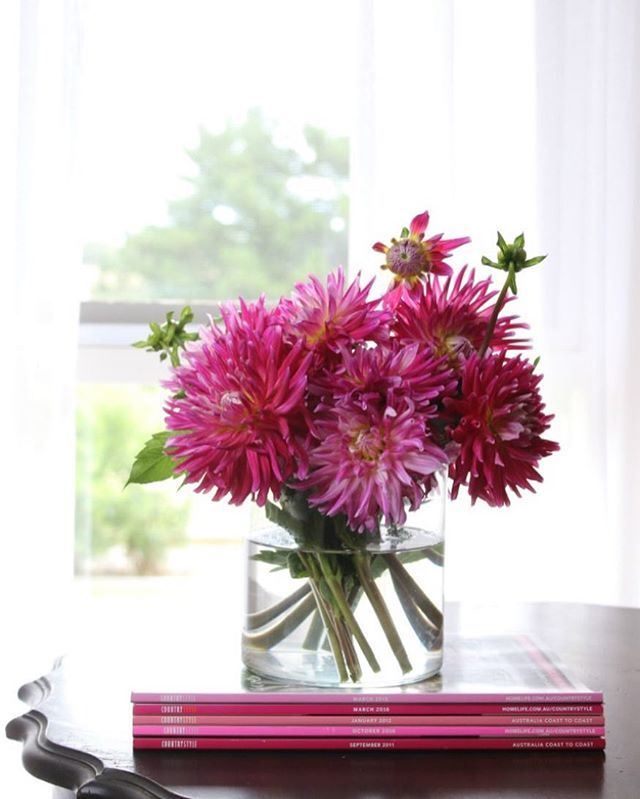 Pink Dahlias in a vase on a vintage table.