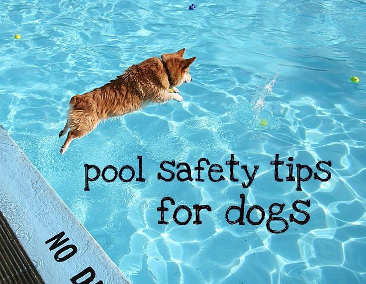 Pool Safety Tips For Dogs Pet Health Tips Pinterest