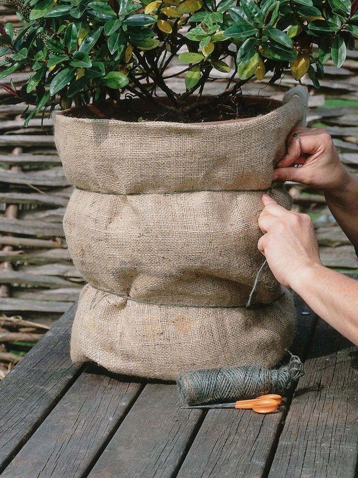 Gartenpflege für Pflanzen im Herbst: Kübelpflanzen überwintern