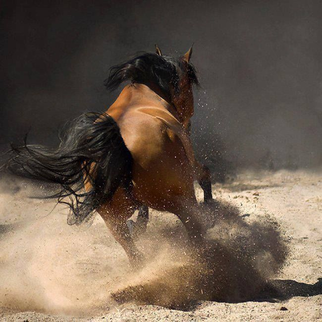 Prendere contatto con il cavallo è un'arte ........