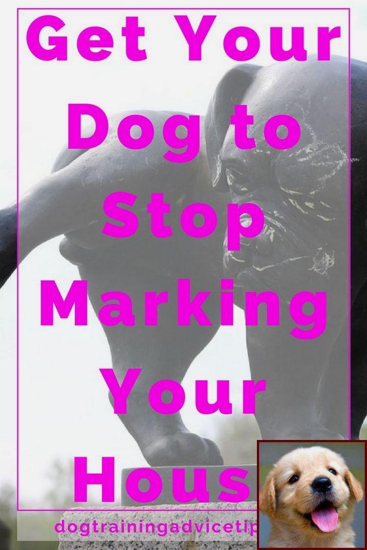 Potty Training Puppy Apartment Petco : potty, training, puppy, apartment, petco, Potty, Training, Puppy, Crate, Classes, Petco, Cost., Behavior,, Behavior, Problems,, Aggressive