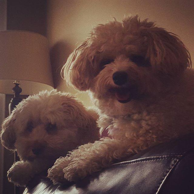 My boys Crosby & Stanley!