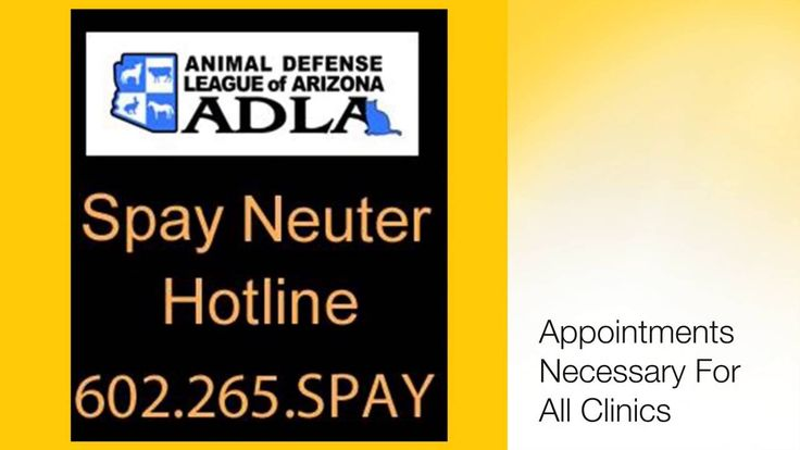National Feral Cat Day :: Oct 2016 featuring ADLAZ.org.  Their program Fall for Felines is saving community cat lives.  Alley Cat Allies created this Pet Holiday