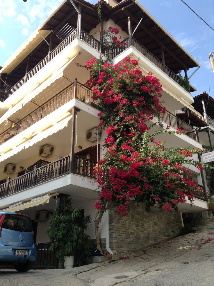 I can find my flowers everywhere. At Neos Marmaras, Halkidiki, Greece September 2014