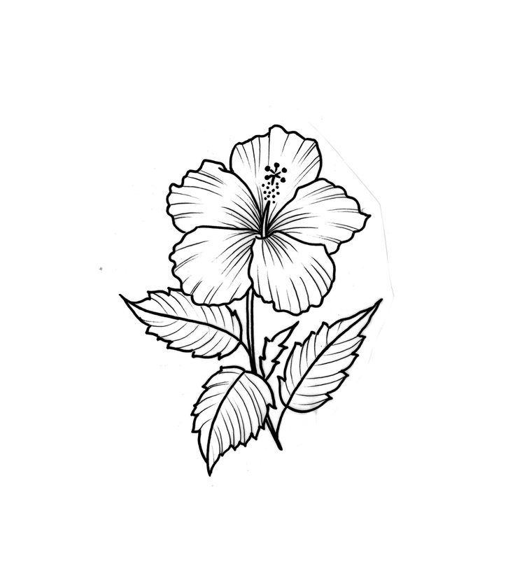 Hibiscus Sketch Flowers In 2020 Hibiscus Flower Tattoos Flower Tattoo Hibiscus Drawing