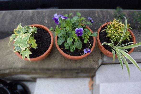玄関前の花壇が防犯対策に!?「花」を飾るだけで効果がある意外な防犯対策とは?