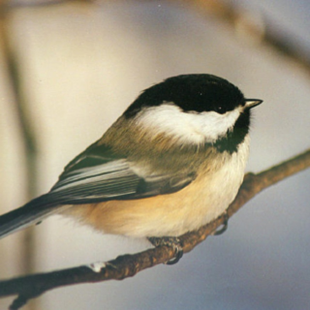 83 best Birdies images on Pinterest | Beautiful birds ...