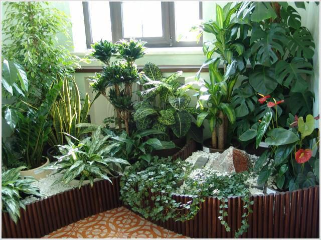 Подкормим комнатные растения натуральными удобрениями из самых обычных продуктов.  1) Бананами Банановые шкурки мелко нарезают и высушивают. При пересадке растений насыпают слоем или просто перемеши…