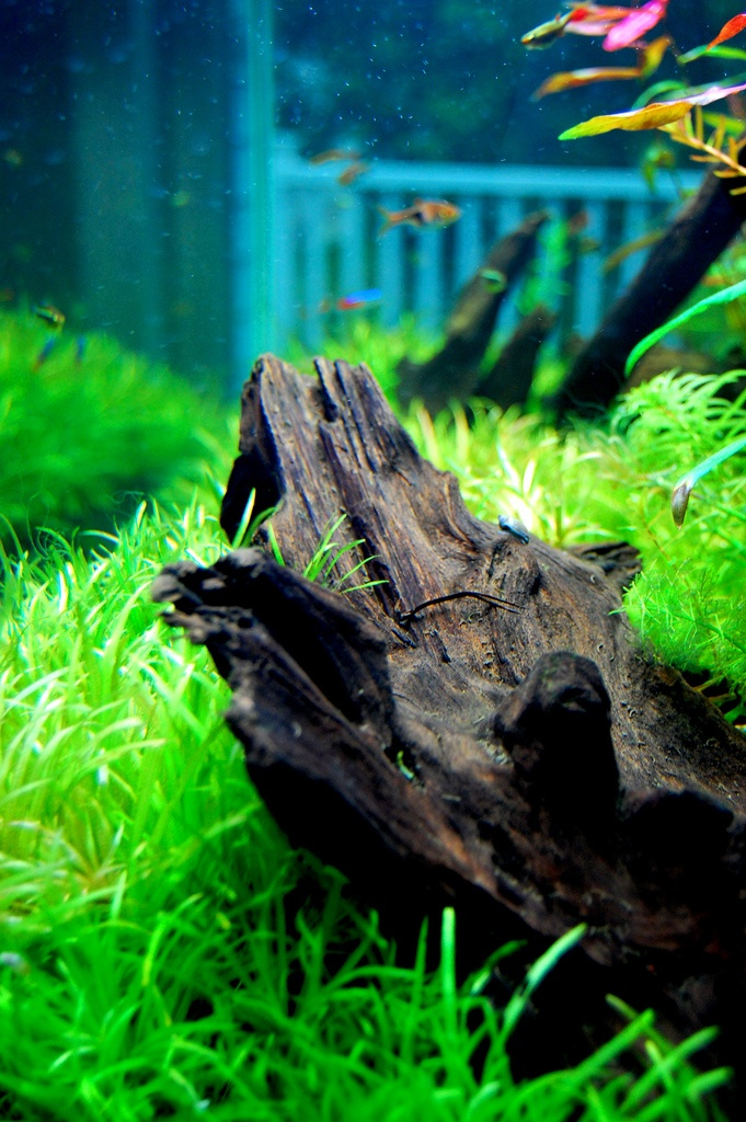 41 best 39 riums images on pinterest aquarium ideas for Fish tank driftwood