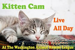 Our kitten cam is back!