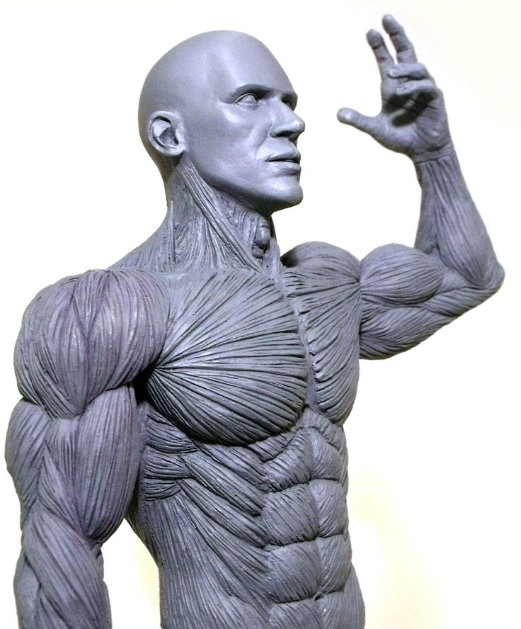 Fancy Anatomy Model For Artists Image - Human Anatomy Images ...
