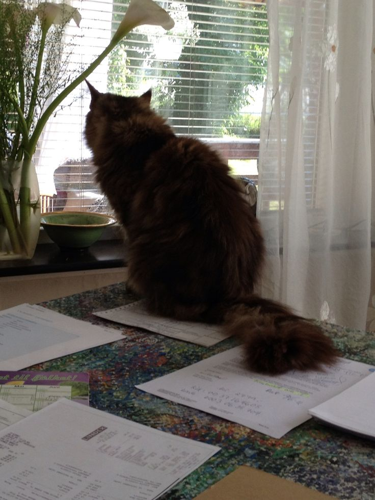 She just dont get it- THIS IS NOT YOUR HOME- What is it about cats and the need to be the center of attention!!