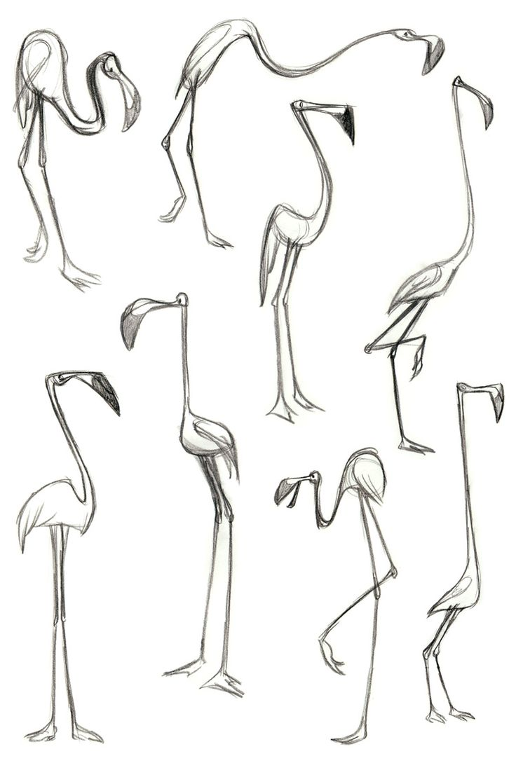 Kristen Campbell Find more at https://www.facebook.com/CharacterDesignReferences if you're looking for: #art #character #design #model #sheet #illustration #best #concept #animation #drawing #archive #library #reference #anatomy #traditional #draw #development #artist #how #to #tutorial #birds #bird