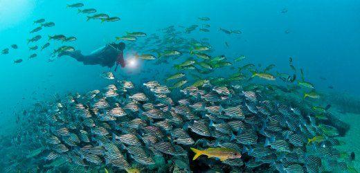 Das Meer vor Mirbat birgt für Taucher viele Überraschungen - und ist touristisch weitgehend unerschlossen. In diesem Teil des Omans ist jeder Tauchgang eine Expedition.