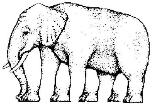 Dibujos divertidos de percepción visual.