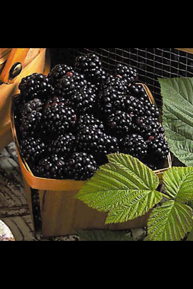 BlackberriesHealthy Stuff, Blackberries Bliss, Blackberries Time, Blackberries Pickin, Outdoor Stuff