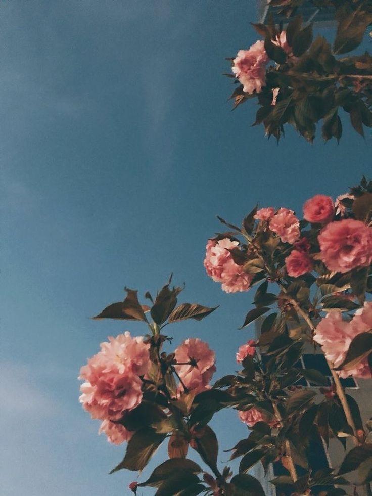 pink roses love