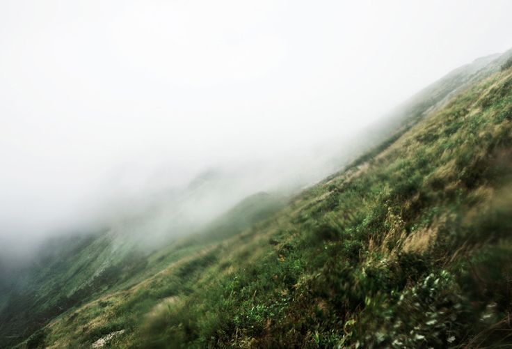 石川竜一による、現地で捕獲した生き物を糧としながら山林に分け入り撮影した写真展示「CAMP」  – HITSPAPER