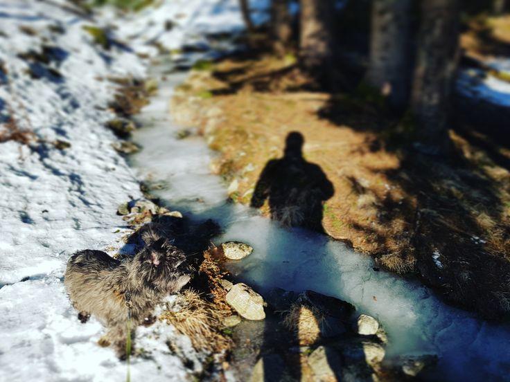 Dogwalk in Norwegian mountain.