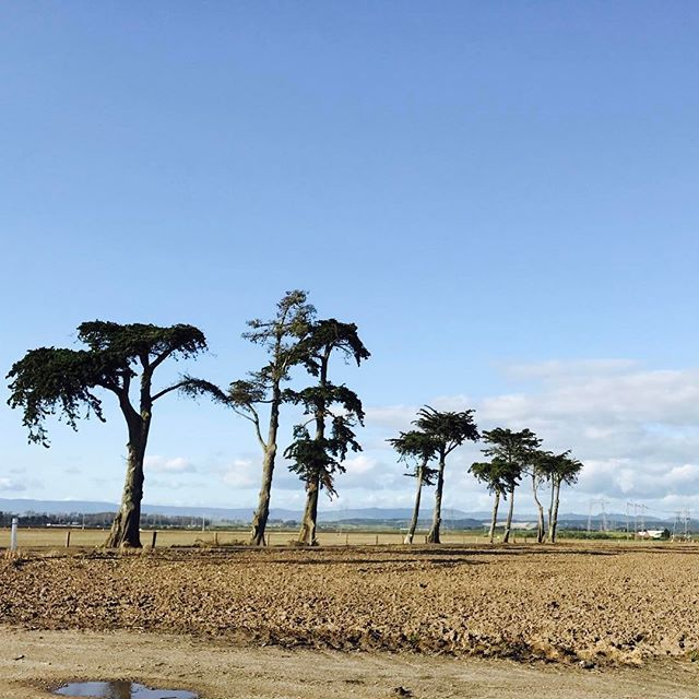 Cypress trees along the coastal countryside in Moss Landing, CA! #podcast #podcasts #talkradio #radioshow #internetradio #mosslanding #meditate #podcasting #yoga #musicians #inspire #la #nyc #santacruz #beach #california #inspire #calilove #sunday #radio #surf #skateboard #snowboard #travel #norcal #cypresstrees #monterey #mosslandinglocals #montereybaylocals - posted by The Subjective Perspective https://www.instagram.com/thesubjectiveperspective. See more of Moss Landing, CA at…