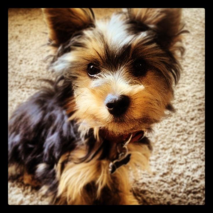 Dax, Rosie's dog