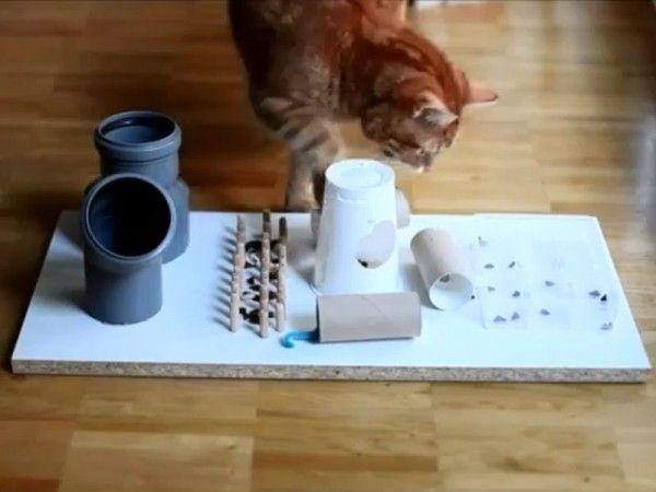 Hochkonzentriert: Katze mit Fummelbrett — Bild: Youtube / leoflixi