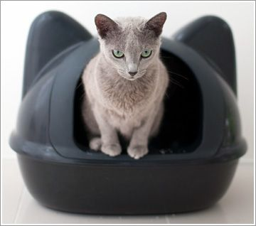 Rakuten: iCat original ☆ cat type toilet- Japanese products from Japan #cat #LitterBox