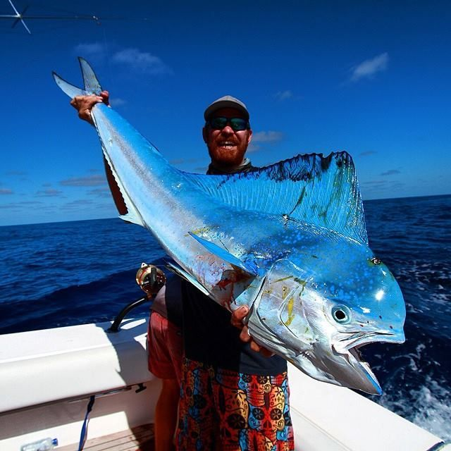 56 best makai fishing line images on pinterest sea for Best saltwater fishing line