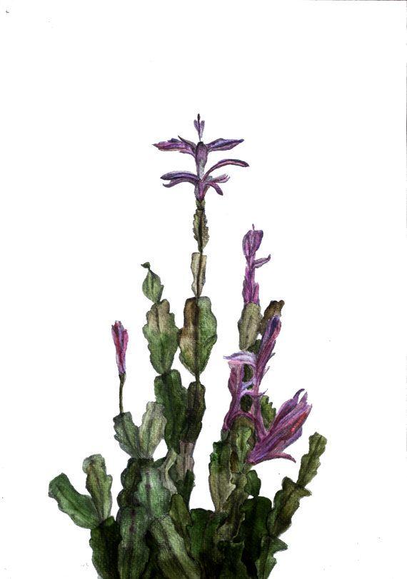 Illustrazione botanica di stampa stampa botanica di MariaBasea