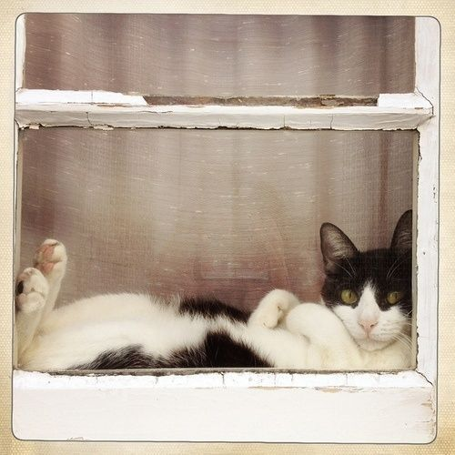 This image never fails to make me laugh. This adorable cat has wedged himself in the perfect spot for people and bird watching! Have a gr...