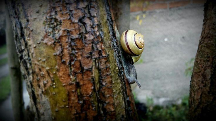 #snail #tree #Rain