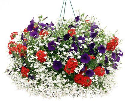 4th of July flowers: Lobelia, Petunia, and Verbena