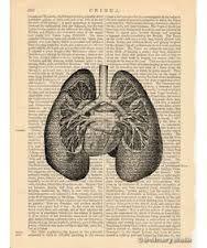 Znalezione obrazy dla zapytania old medical drawings