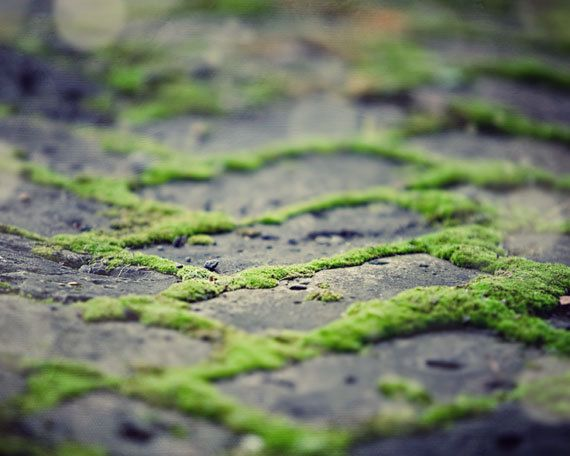 love when moss grows between the pavers on a patio or walkway