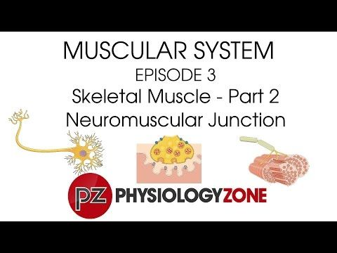 Neuromuscular Junction | PhysiologyZone | Muscular Series - YouTube