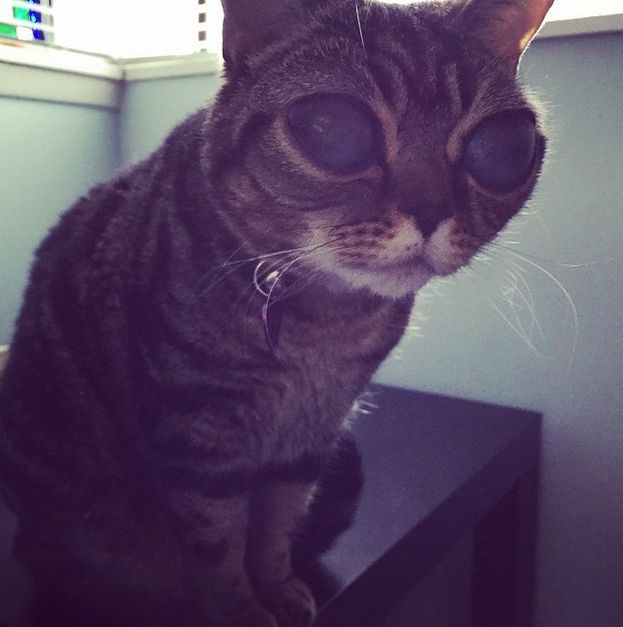 25 Photos Of Matilda, The Cat With Alien Eyes