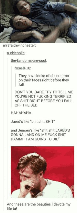 I watched this gif for five minutes and my sides are hurting from laughing so hard XD