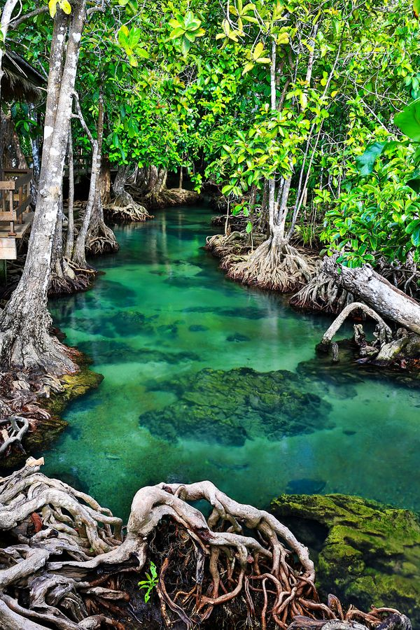The Emerald Stream, Krabi, Thailand