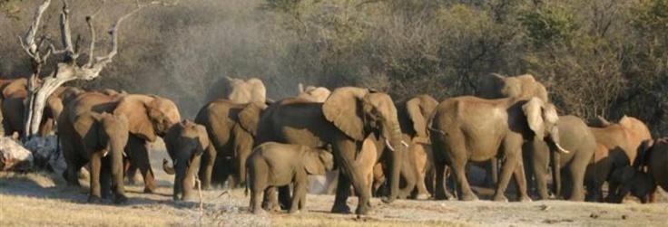 Per mio figlio più piccolo un viaggio a vedere gli animali in Africa.