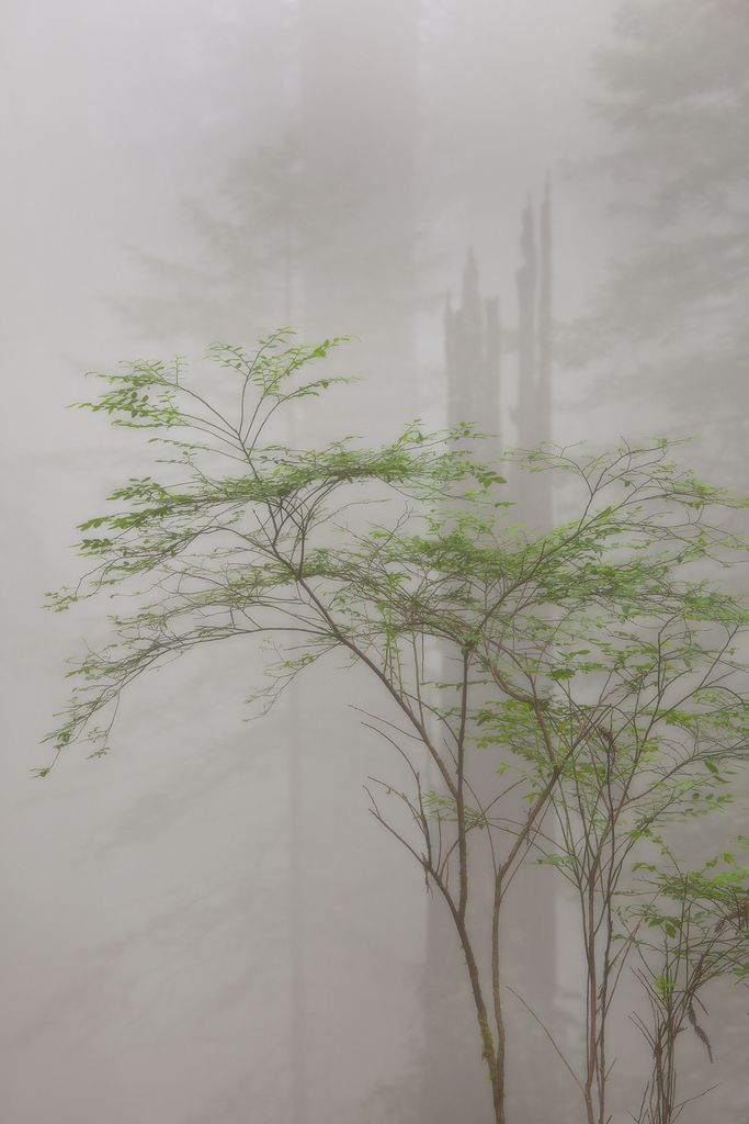 Jesse Estes: Foggy Forests, Natural Beautiful Places, Mists, Art, Foggy Places, National Parks, Jesse These, Peace Forests, Photo