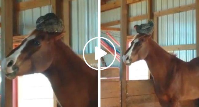 Quando a Dona Foi Ver Os Cavalos Nunca Pensou Encontrar Algo Assim!