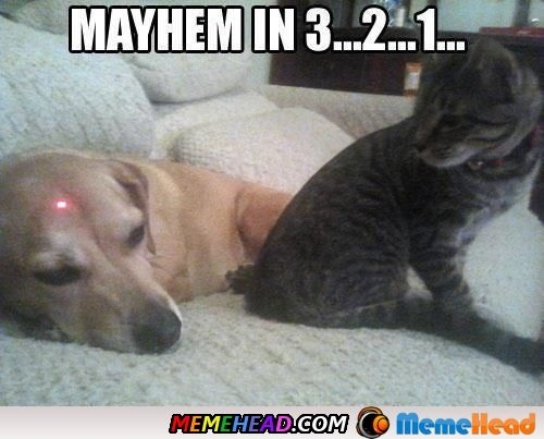 cat humor funny laser dog victimized
