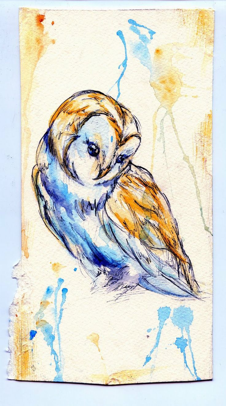 Complimentary Owl by Stargazer-Gemini.deviantart.com on @deviantART