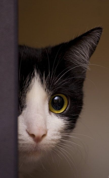 cats...I have a tuxedo cat with a white stripe that runs the length of his nose...I named him Skunky!