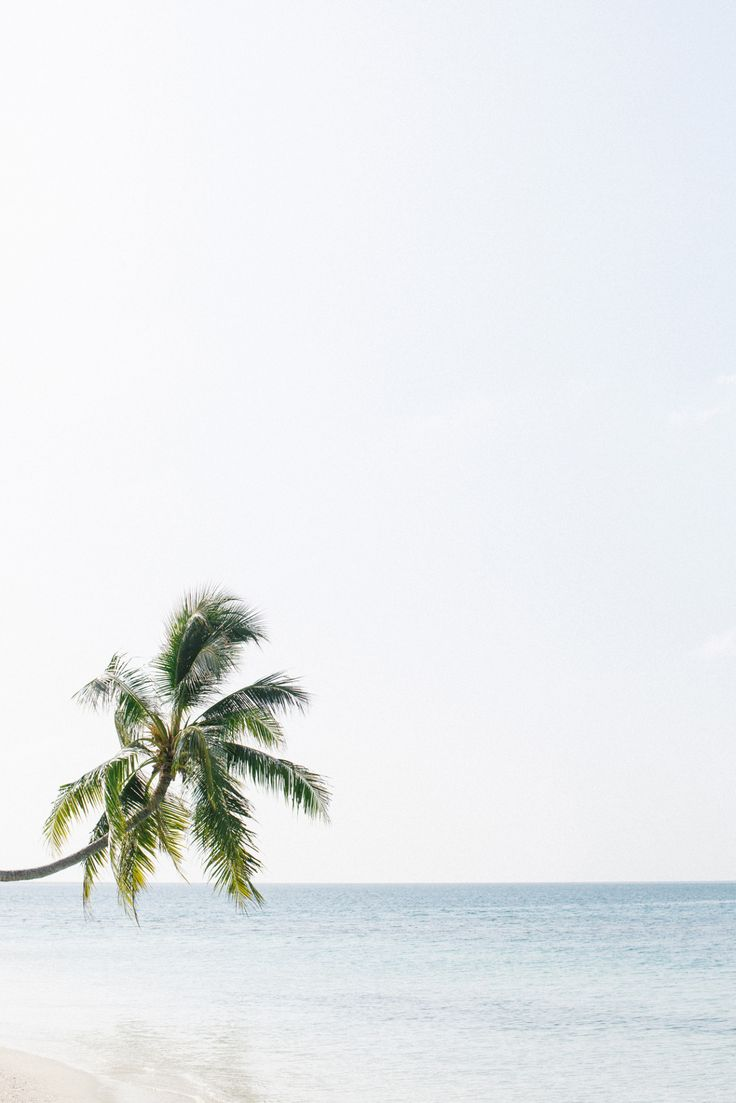 MALDIVES From Cereal Volume 9 Photo by Rich Stapleton - dreaming of the Maldives.. palm trees and calm blue sea