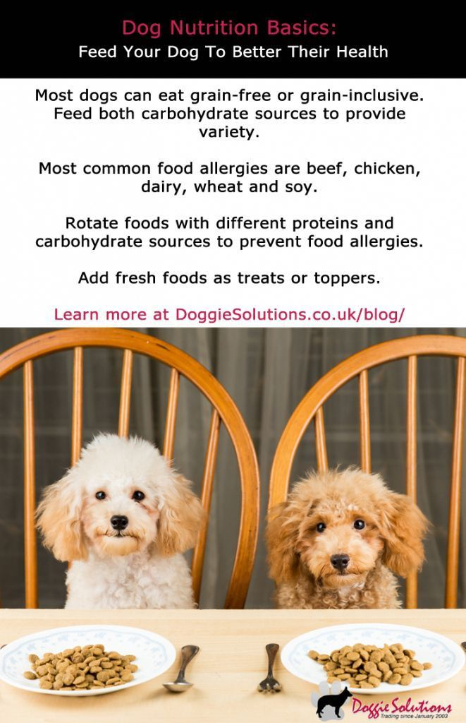 Cat Nutrition Diet Dog Nutrition Basics How To Feed Your Dog To