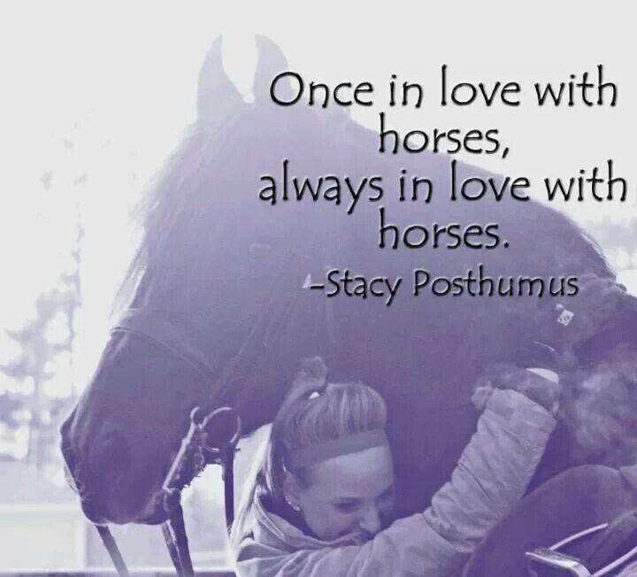 once in love with horses, always in love with horses